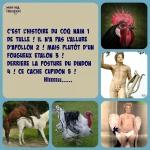 I19.-Politique-Le-Coq-de-Tulle-.jpg