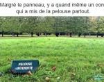 G18.-Humour-Pelouse-Interdite.jpg
