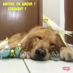 H4.-Humour-Amities-ou-Amour-Craquant-.jpg