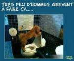 I3.-Humour-WC-Pour-Toutou.jpg