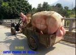 I5.-Humour-Phares-de-Recul-Chinois.jpg