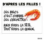 L29.-Humour-Les-Crevettes-.jpg