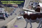 M29.-Humour-Nx-Radar-Meeu-.jpg