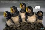 N19.-Humour-Oiseaux-Femelles.jpg
