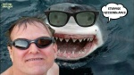 R3.-Humour-Ressemblance-Like-Sharks.jpg