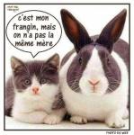 S10.-Humour-Les-Frangins.jpg