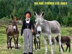 A17.Les-Anes-.jpg