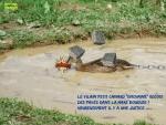 V17.-Politique-Le-Vilain-Petit-Canard-Enchainé-.jpg
