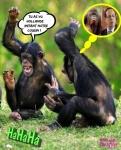 V24.-Humour-Hollande-et-Les-Singes.jpg