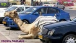 W25.-Humour-Parking-au-Magreb.jpg