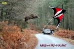 Y21.-Humour-Un-Cerf-Volant.jpg