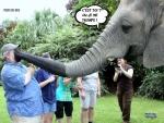 Y26.-Humour-Un-Eléphant-ça-Trompe-.jpg
