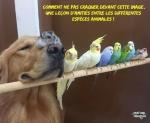 AA10.-Humour-Amities-Entre-Animaux.jpg