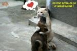AA4.-Humour-Le-Grand-Amour.jpg