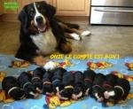 AA5.-Humour-Onze-Le-Compte-Est-Bon-.jpg