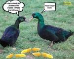 AB20.-Humour-Casser-3-Pates-a-un-Canard-.jpg