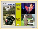 AC10.-Humour-Poule-Dinde.jpg