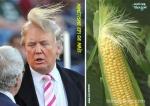 AE9.-Politique-Trump-LEpi-De-Maîs.jpg