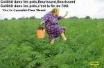 AI14.-Humour-ColShit-Dans-Les-Prés.jpg