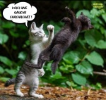 AI19.-Humour-Pugilat-ChatChat.jpg