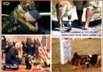 AI12.-Politique-Soldats-Canins-.jpg