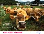 B13.-Humour-Miss-France-Limousine-.jpg