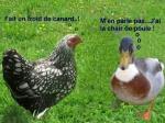 C19.-Humour-Cancan-de-Cocotte.jpg