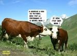 C12.-Humour-Dialogues-de-Ruminants.jpg